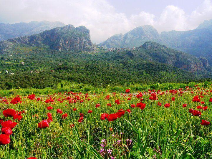 Djurdjura natural park, Bouira , Algeria