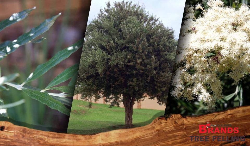 8d35d1bb5f83460f5292e719914e3778 - Trees For Small Gardens South Africa