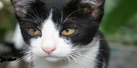 Jenis Kucing Kampung Apa Saja Macam Macam Jenis Kucing Lokal Yang Ada Http Www Kucinglovers Com Jenis Kucing Kampung Kucing Kucing Hewan Peliharaan Jenis