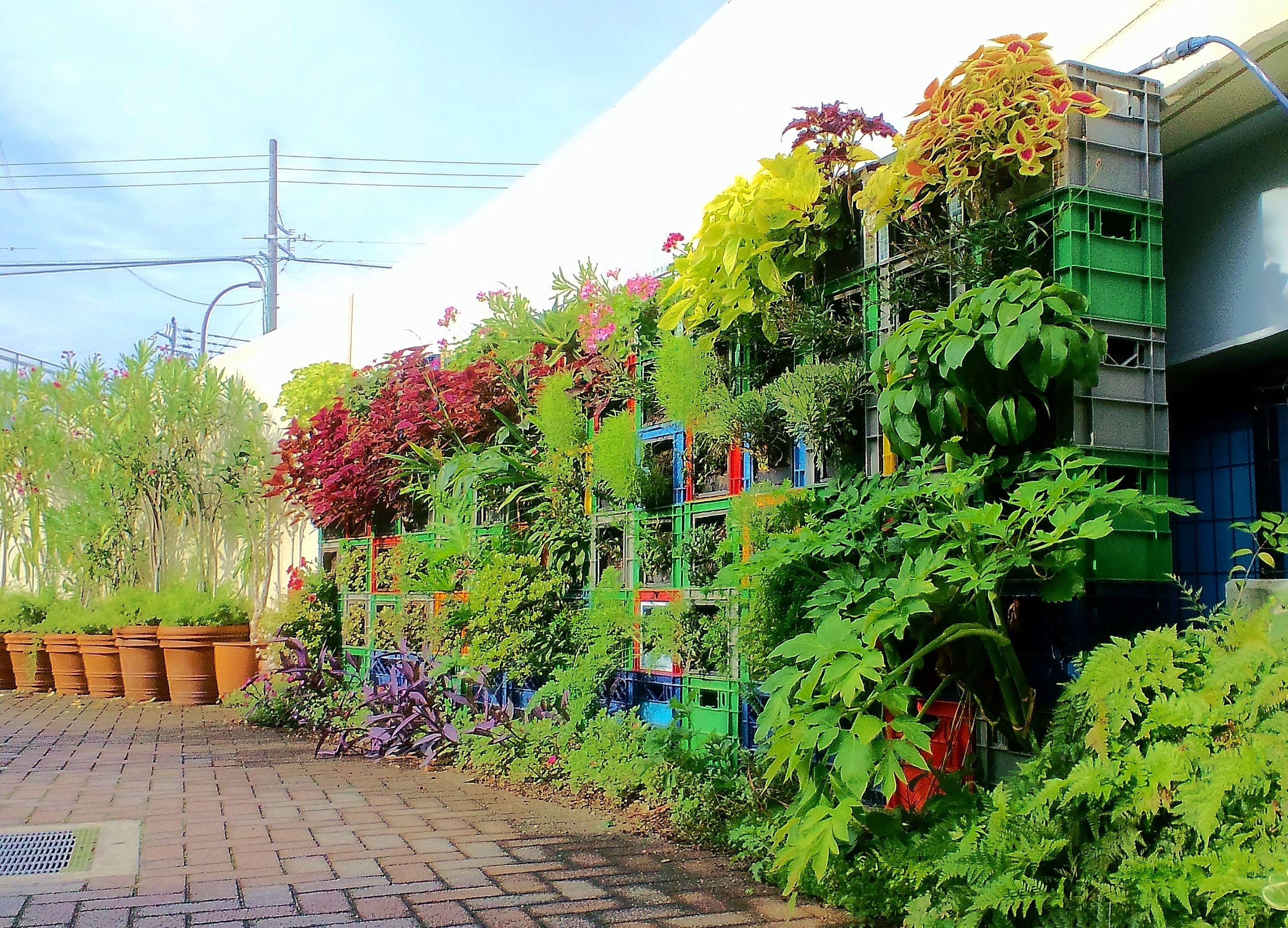 ■ Milk crate Vertical garden