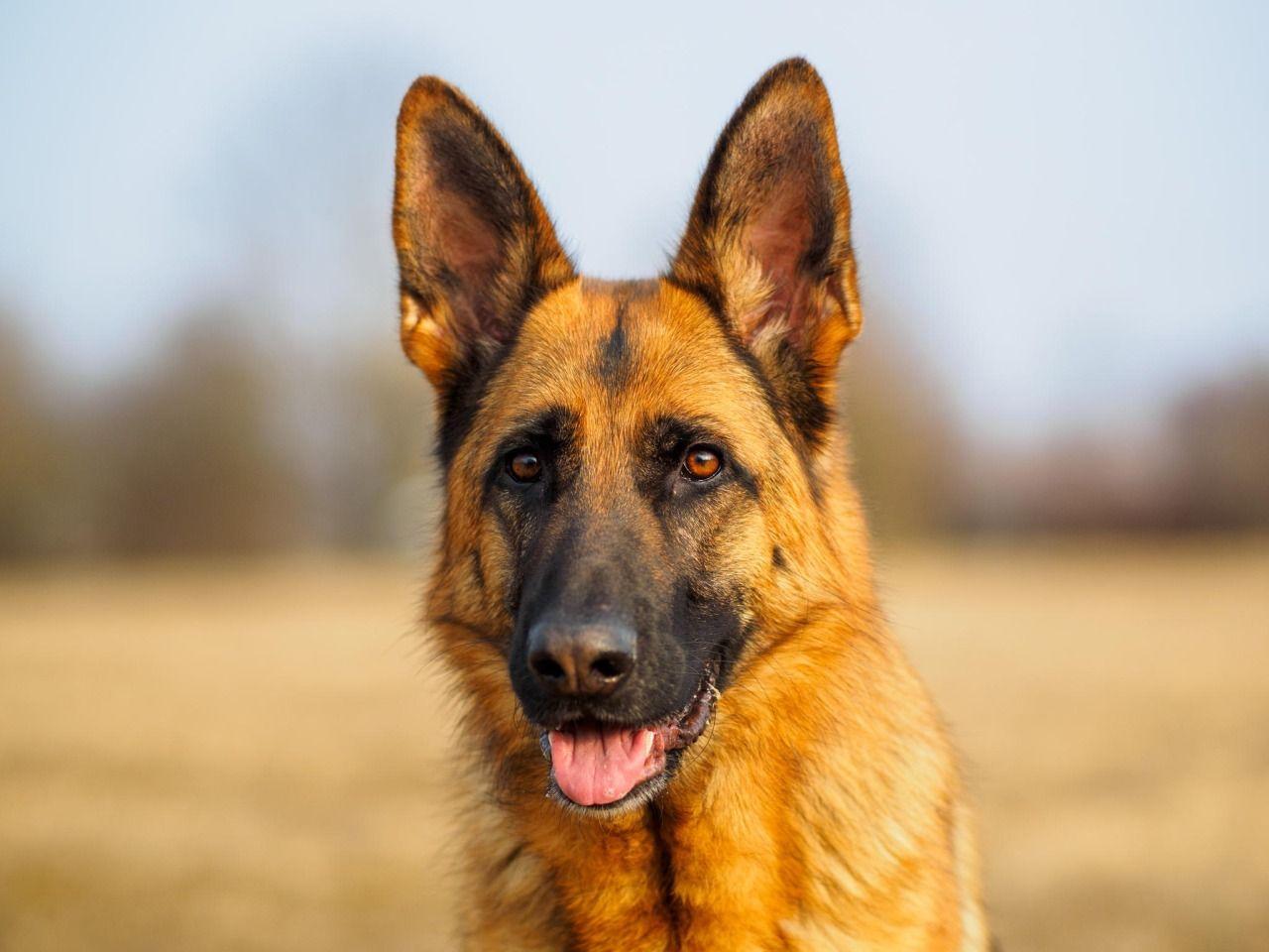 handsomedogs - laughing dog / / Alexander Kunze