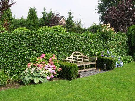 Efeuhecke im Garten - Mobilane Fertighecke® - Pflanzfertige