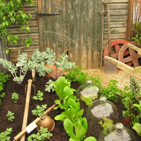 Glass cloches, small kitchen garden