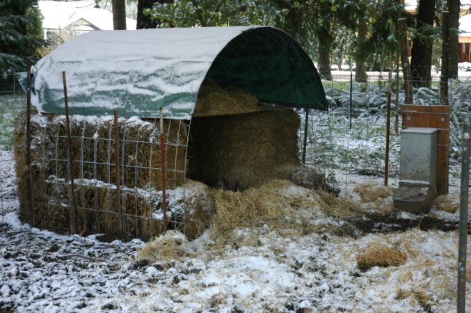 Pig hut, easy way to keep pigs in winter