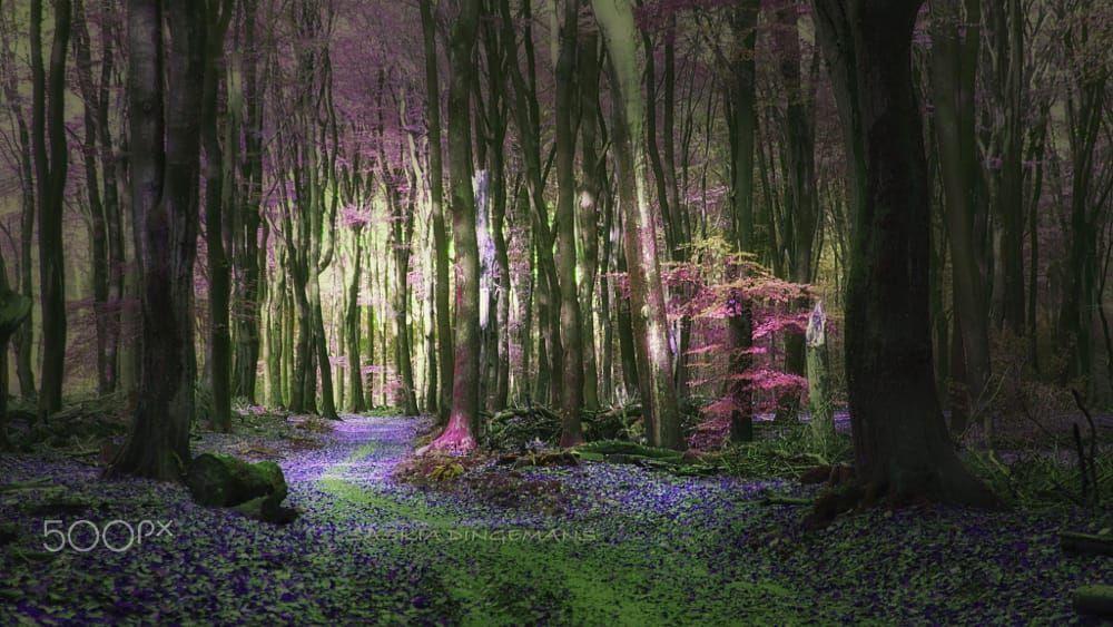 Avatar Dream by Saskia Dingemans on 500px