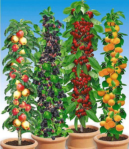 s ulen obst rarit ten kollektion 4 pflanzen obstgarten pinterest garten pflanzen und. Black Bedroom Furniture Sets. Home Design Ideas
