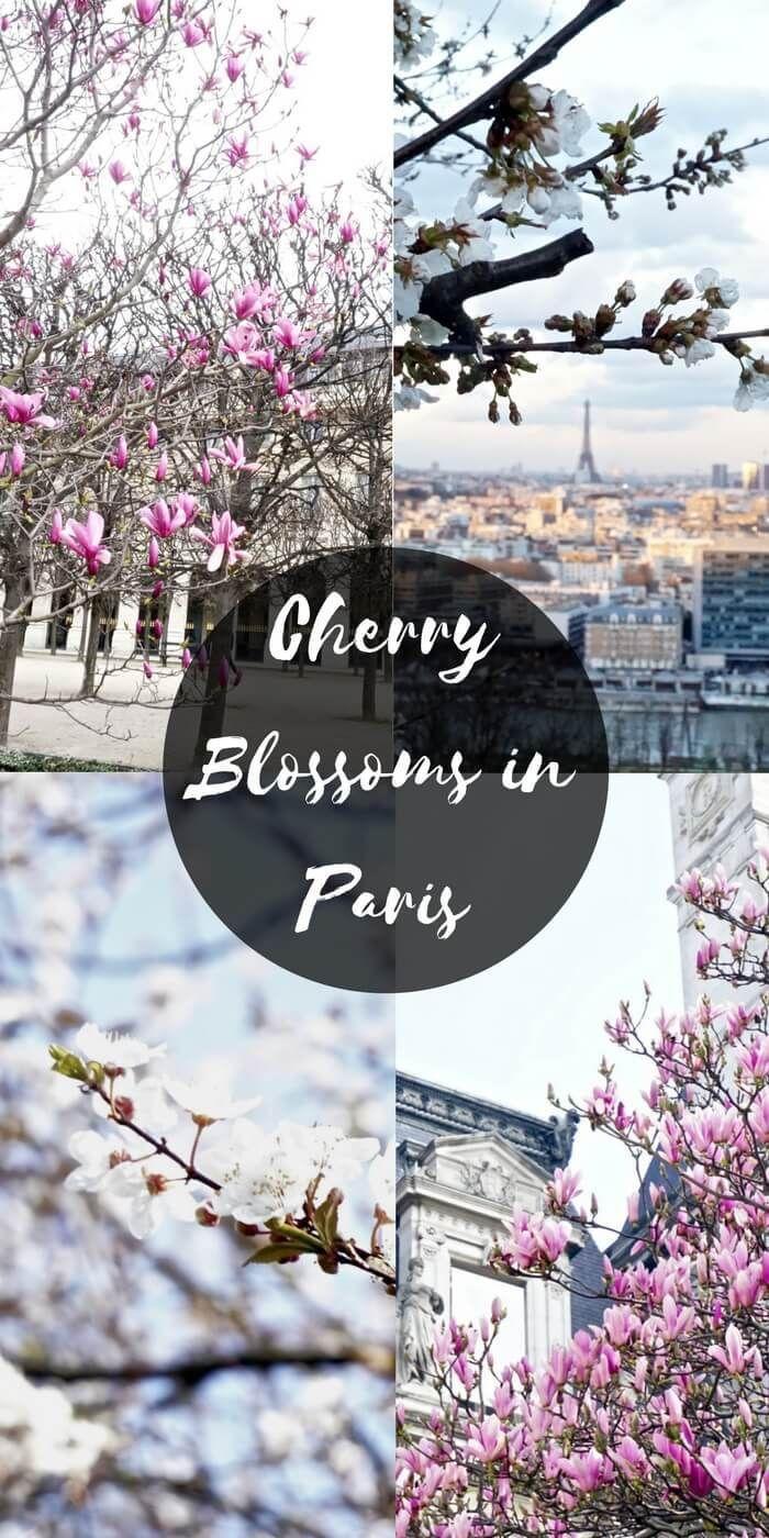 Where To Find Cherry Blossoms In Paris 2021 Solosophie Paris In Spring Paris France Paris