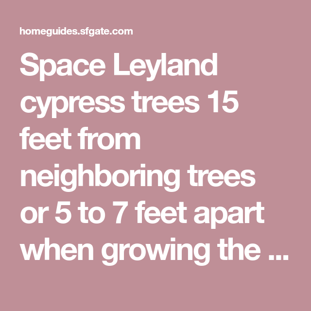 How Far Apart Do You Space Leyland Cypress Trees