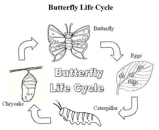 Coloring Pages Butterfly Metamorphosis Free Coloring Pages For Kids Butterfly Life Cycle Life Cycles Butterfly Coloring Page