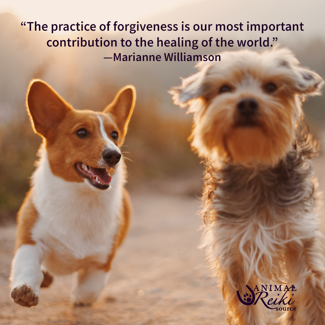 The Practice Of Forgiveness Is Our Most Important