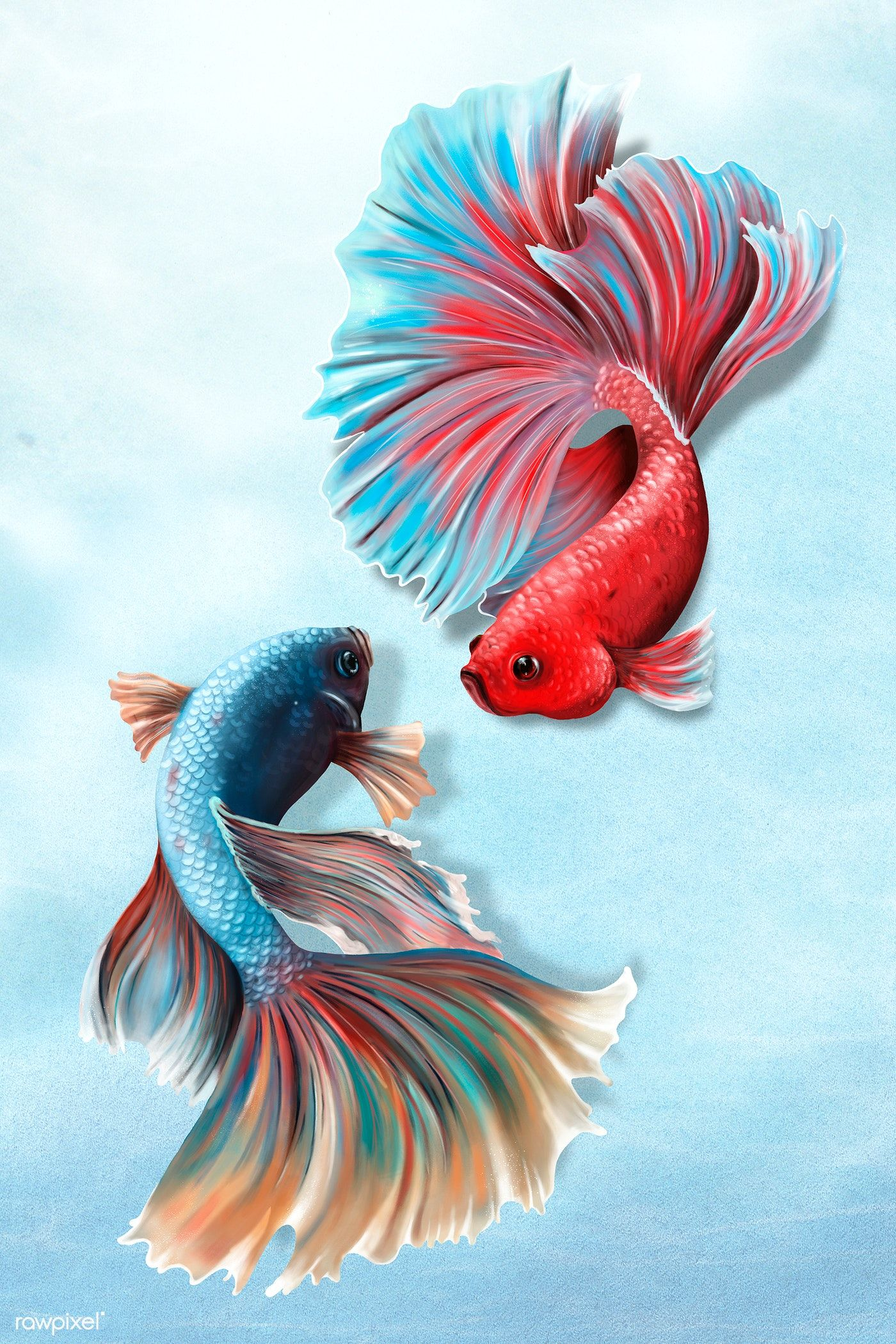 Download Premium Illustration Of Colorful Betta Fishes On A Sky Blue In 2020 Fish Drawings Betta Fish Image Of Fish