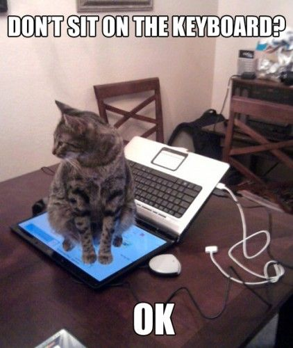 images about Cats kittens on Pinterest   I love cats  Cute           images about Cats kittens on Pinterest   I love cats  Cute cats and Funny cat pictures