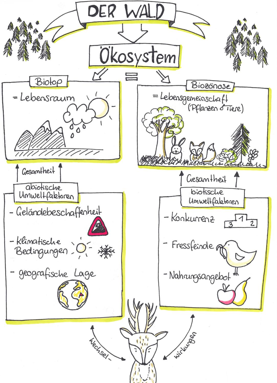 Biotoptypen Als Erfassungs Und Bewertungseinheiten