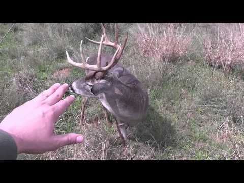 322 Inch Whitetail Buck with a Crossbow in Alabama! - YouTube
