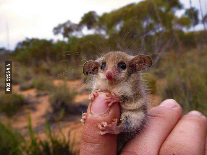 Not all Australian animals are trying to kill you