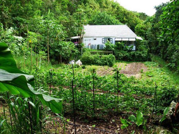 Garden on Mt. Scenery, Saba - Dutch Caribbean - www.sabatourism.com