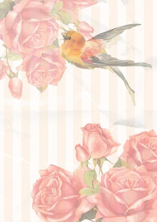 Free Image on Pixabay - Vintage, Rose, Bird, Pink ...