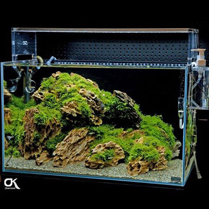 Attractive Buy Random Pick ADA Dragon Stone Rock Aquarium Moss Plant Shrimp Aquascaping  At Online Store