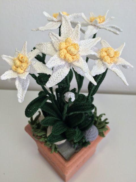 Il blog di sam spiegazione della stella alpina all for Il blog di sam piante grasse