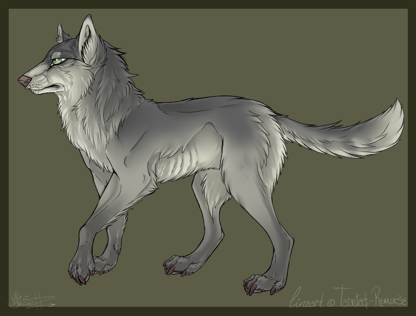 Wolf Lineart : Wolf lineart with shading by tainted remorse viantart on