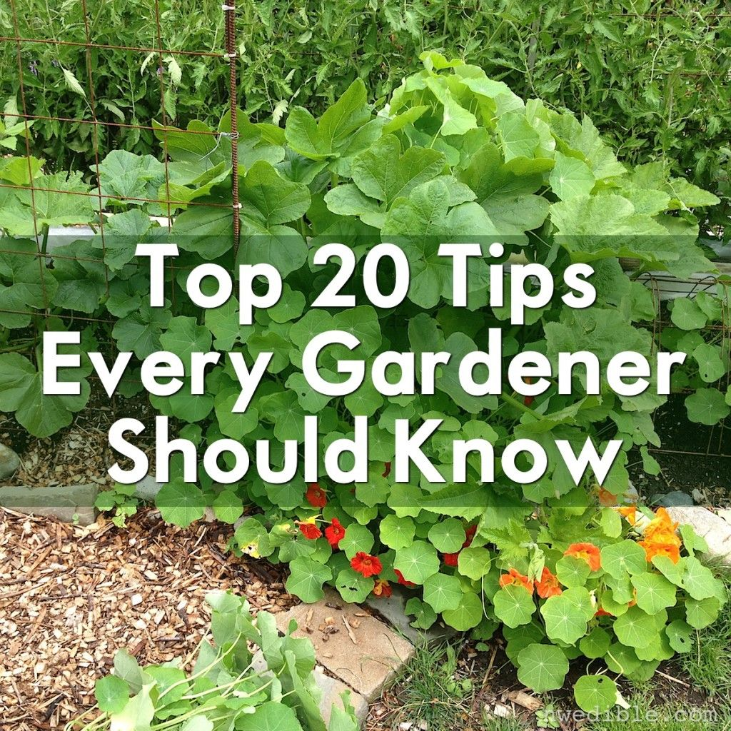 Vegetable Garden Advice Part - 20: Iu0027ve Handed Out A Lot Of Gardening Advice In The Years Iu0027ve Been Writing  Here, But Some Tips Are Just So Timeless I Find Myself Coming Back To Them  Over And ...