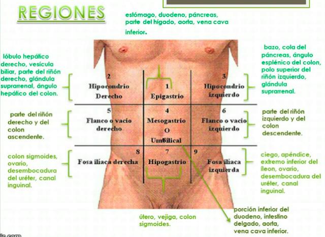 Aprende de una manera muy fácil las regiones abdominales y los ...