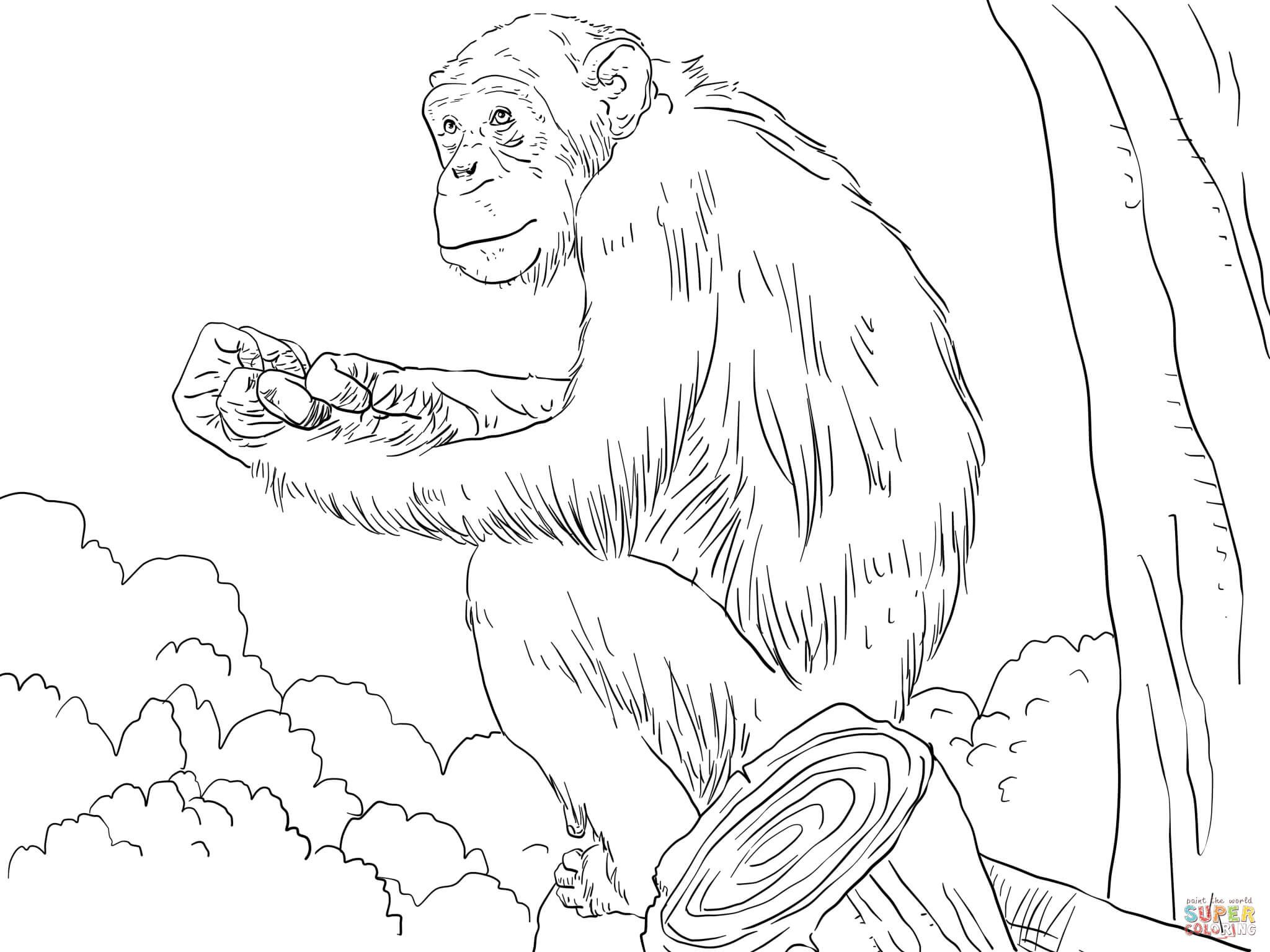 Common Chimpanzee Super Coloring Monkey Coloring Pages