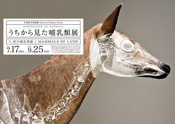 I came up with an idea of a mock exhibition posters, The Composition of Mammal's, at the National Museum of Nature and Science, Tokyo, which studies the anatomy of mammals with displays of taxidermy and skulls.