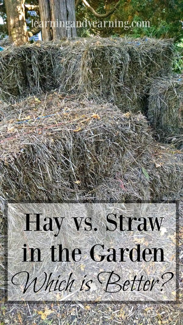 8d3e75aaa576abee8cab4f5ed9d13026 - Straw Bale Vs Hay Bale Gardening