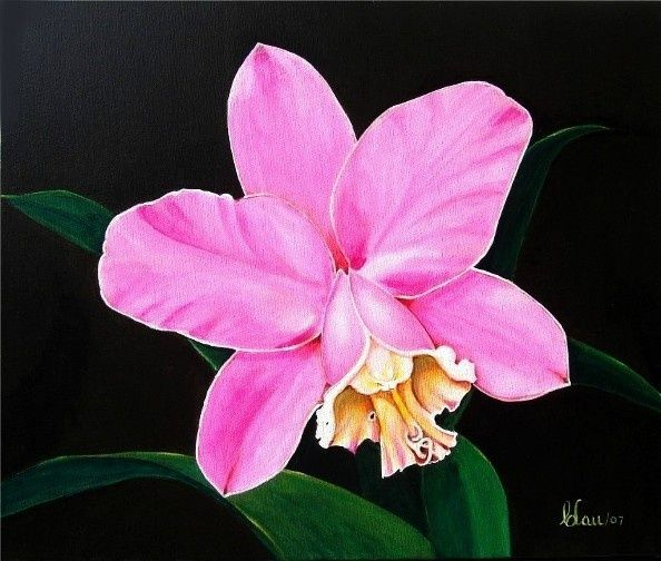 Cataleya Colombian Flower Tattoo Pin Cattleya For Pinterest On Orchids Painting Orchid Drawing Cattleya