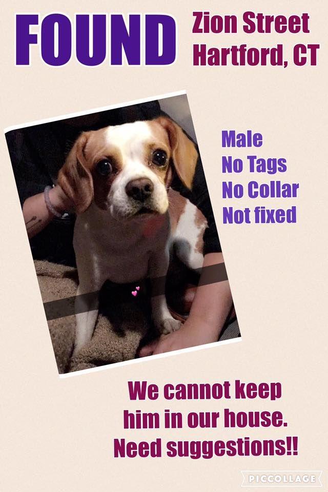 Michelle Morningstar Proper Ct Dog Gone Recovery Volunteer Network
