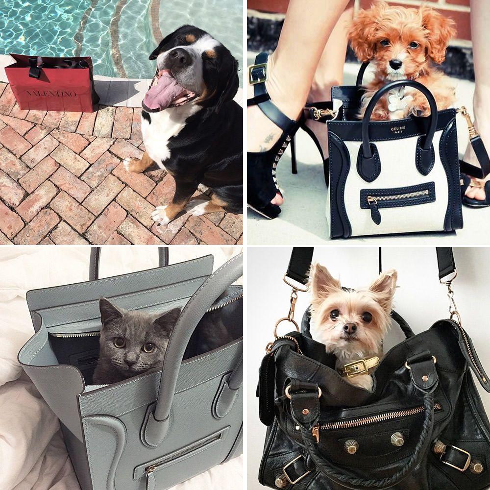 Introducing Pursesandpaws Purseblog Bags Fur Babies