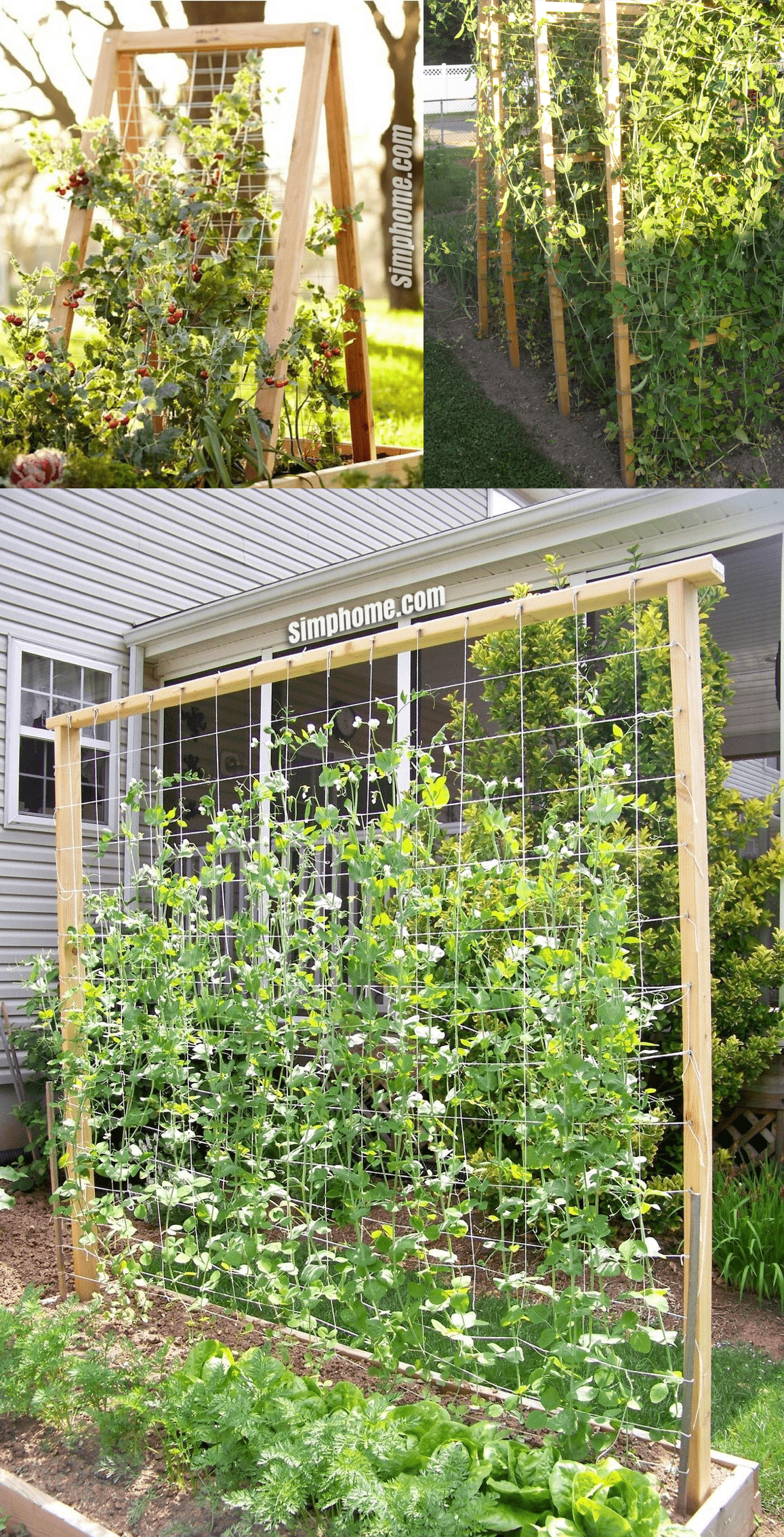 10 Vegetable Garden Trellis Ideas in 2020