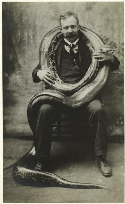 Man with two-hundred-pound boa constrictor - c. 1906