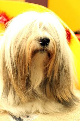 What Is The Oldest Breed Of Dog