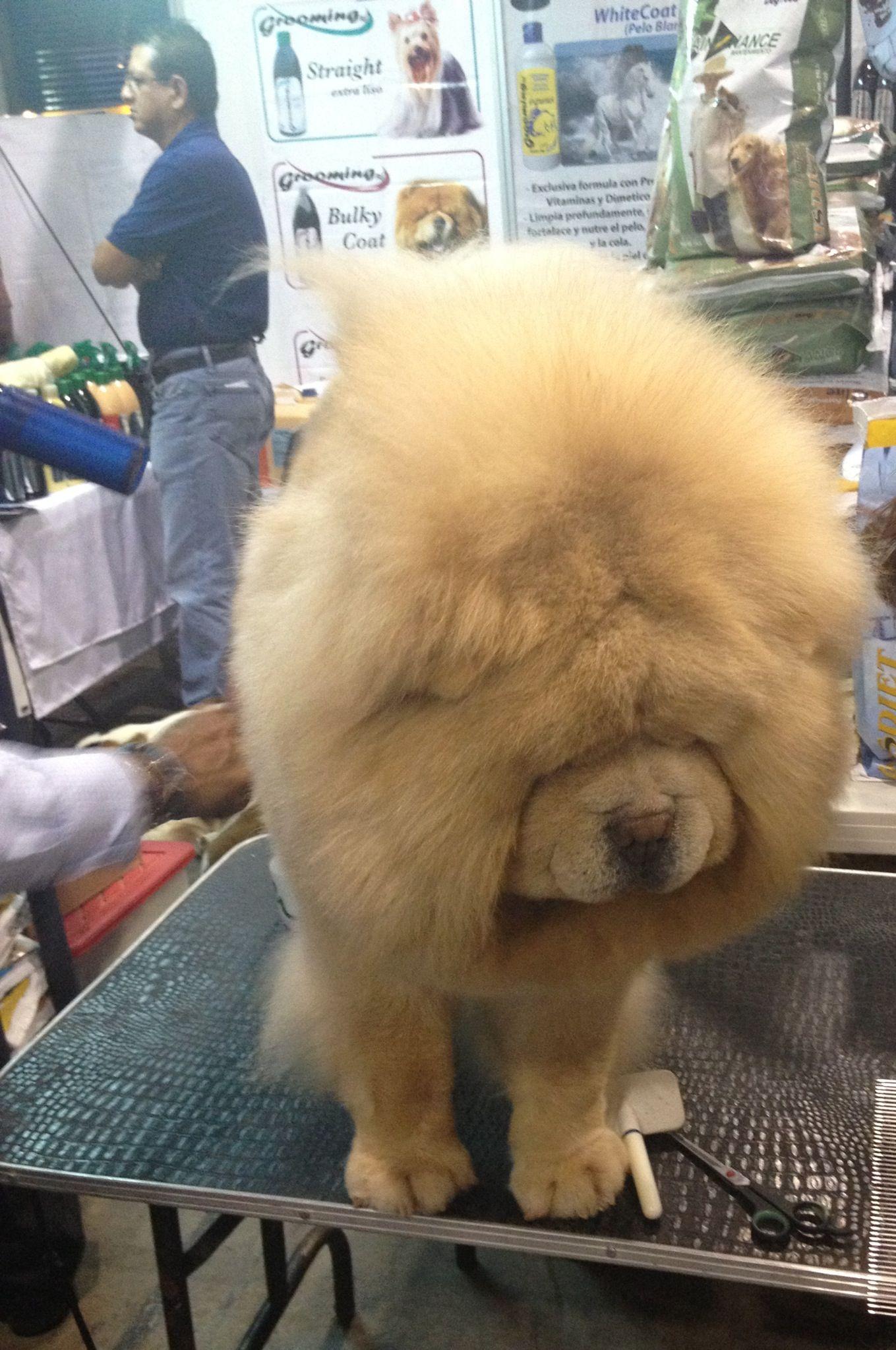 Esponjadisimo!!! Fluffy dogs, Pets, Dogs