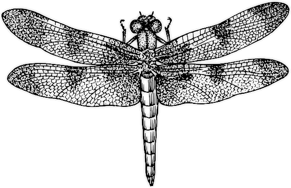Pin By Gina Macabre On Tattoo Dragonfly Clipart Dragonfly Art Dragonfly Insect