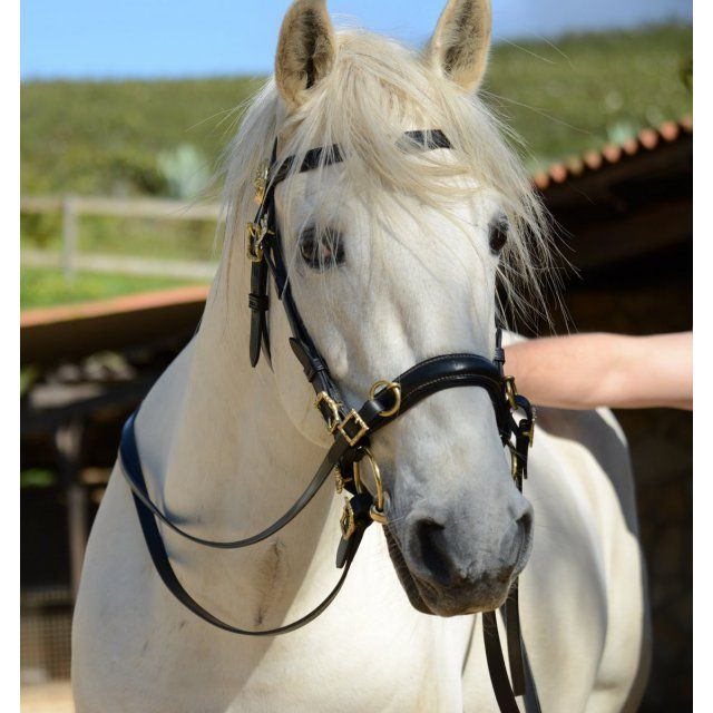 Academic Bridle With Semi Cavesson Quinta Cavalos Verdes