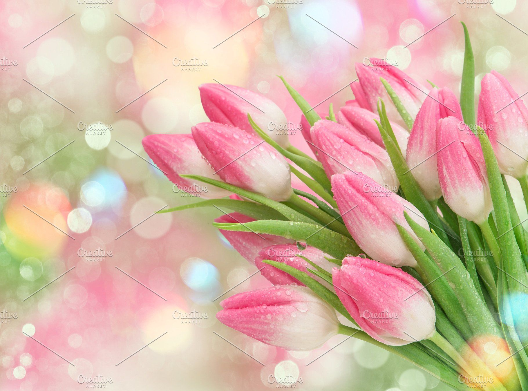 Pink Tulip Flowers Spring Nature Bac Pink Flower Photos Spring Flowers Background Pink Tulips