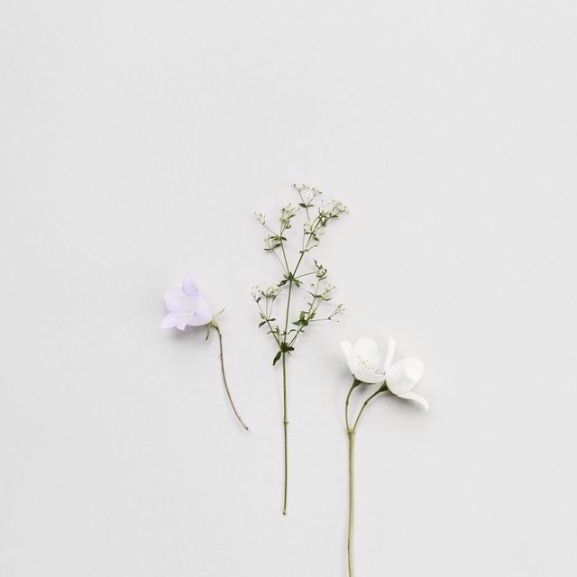 Gemini Planting Flowers Plants Pretty Flowers
