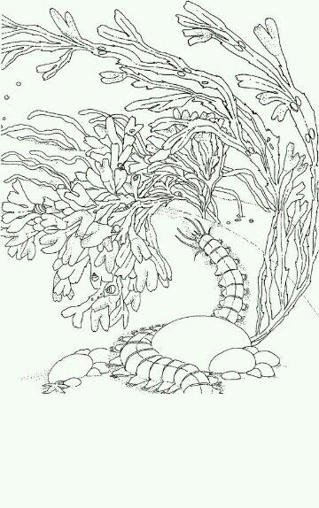 Sealife | Coloring pages | Pinterest