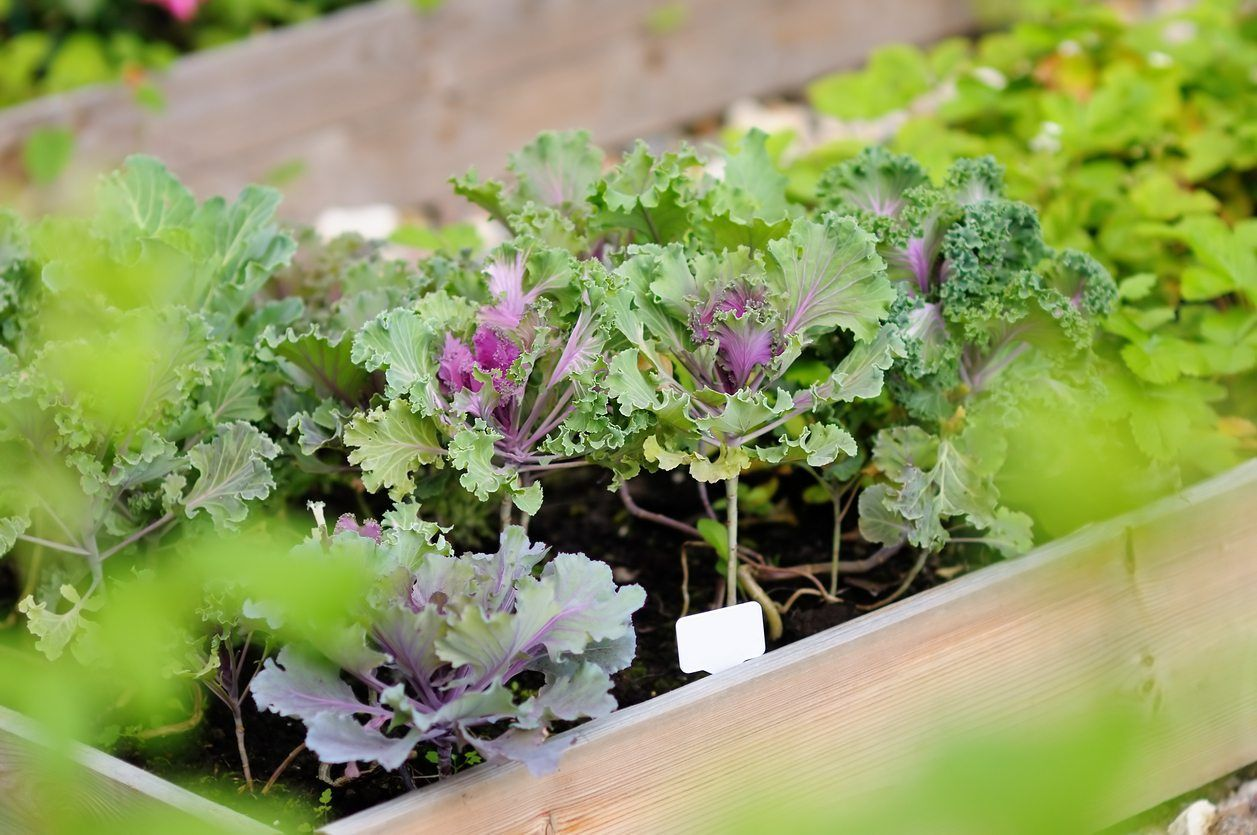 Zone 6 Vegetable Planting Tips On Growing Vegetables In