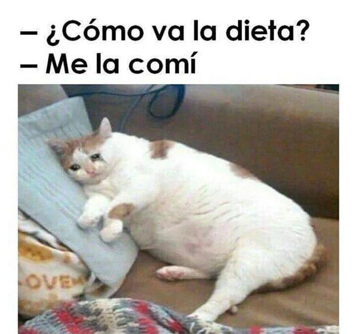 Memes Chistes Humor Funny Invequa Memegato Memesgatos Invequa Memes En Espanol Memes De Perros Memes Memes Divertidos Memes Perros Meme Divertido