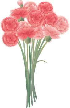 Free Download Of Pictures Of Carnations Download Carnation Flower