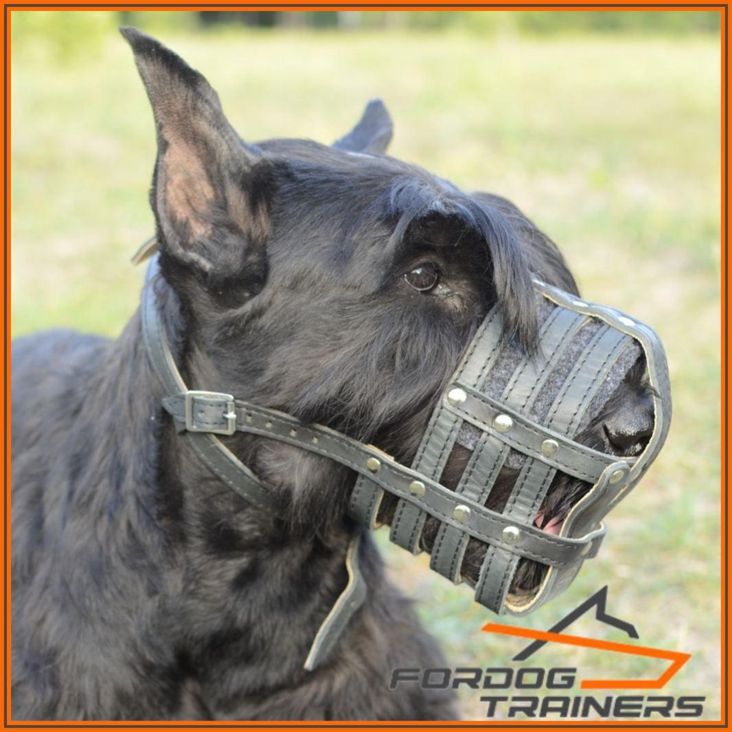 Kaganiec nitowany dla różnych ras psów «Zarządzanie