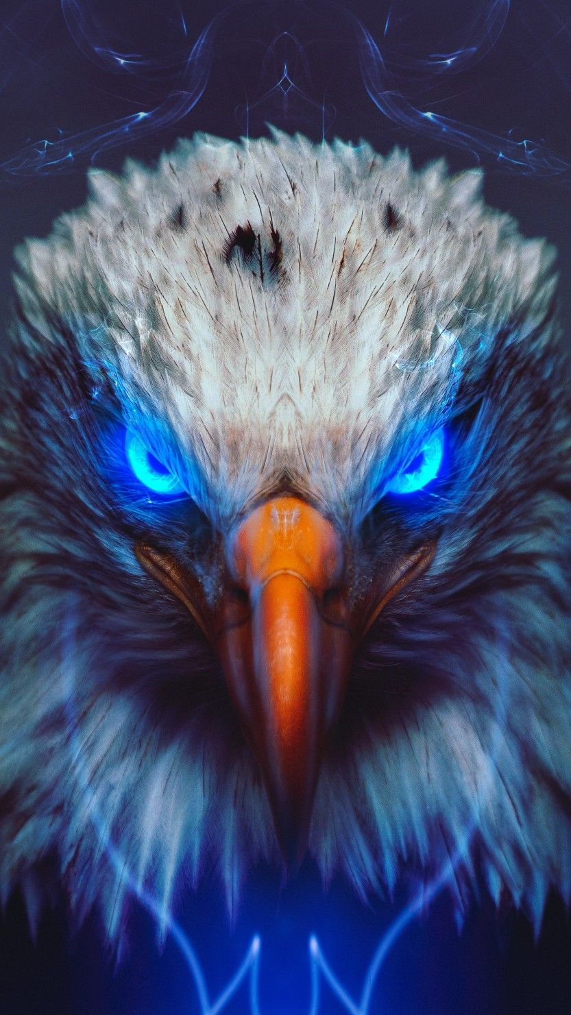 Eagle Wallpaper Eagle Wallpaper Animal Wallpaper Eagle Pictures