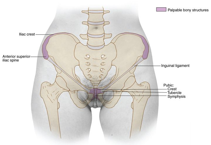 Pelvic girdle | read | Pinterest | Anatomy, Human anatomy and Exercises