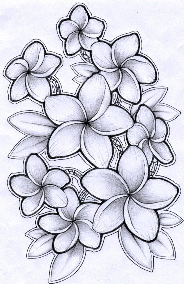 Frangipani Flower Drawing Plumeria Tattoo Hawaiian Tattoo