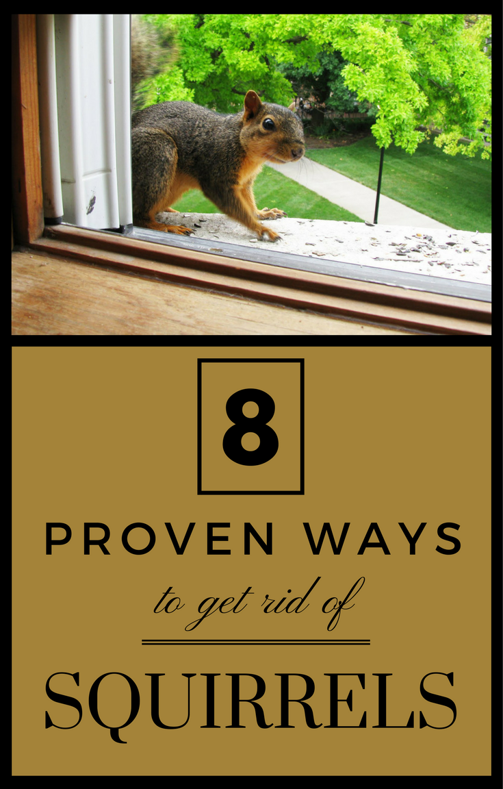 8 Proven Ways To Get Rid Of Squirrels | GARDENS-BUG PEST CONTROL ...