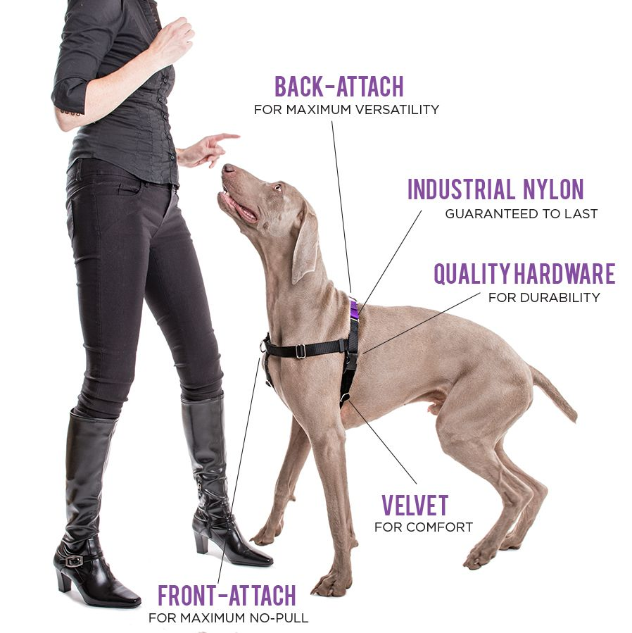 Victoria Stilwell Develops New Dog Training Product Line Dog